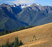 Mount Carrie beyond black-tailed deer on the meadows of Hurricane Ridge, Olympic National Park by DArthurBrown