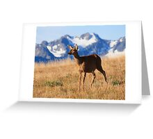 A black-tailed doe stands proud on Hurricane Ridge, Olympic National Park Greeting Card