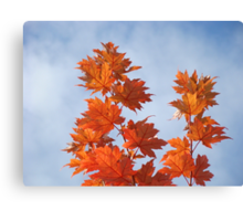 Orange Autumn Fall Tree LEAVES Blue Sky Art Prints Canvas Print