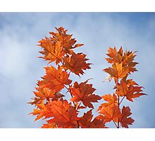Orange Autumn Fall Tree LEAVES Blue Sky Art Prints Photographic Print