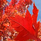 RED Fall Tree LEAVES Art PRINTS Canvas Autumn by BasleeArtPrints
