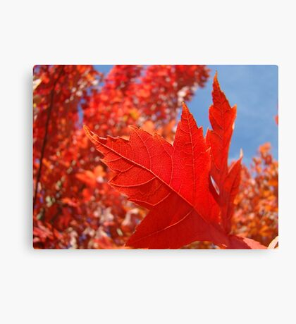 RED Fall Tree LEAVES Art PRINTS Canvas Autumn Canvas Print