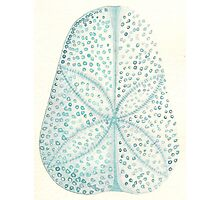 Sand dollar shell - watercolour in blue Photographic Print