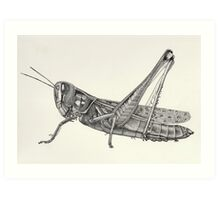 Black and white grasshopper pointillism insect Art Print
