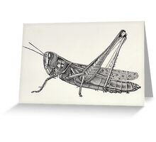 Black and white grasshopper pointillism insect Greeting Card