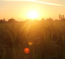 Sunset in Indian farm by Imbng