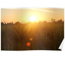 Sunset in Indian farm Poster