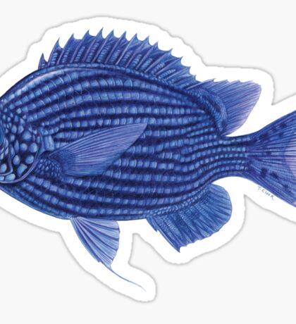 Deep Blue Chromis Sticker