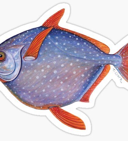 Opah (Lampris guttatus) Sticker