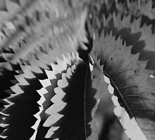 abstract light and shadow bw by Ike Faithfull