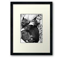 Russian Blue X Kittens Framed Print