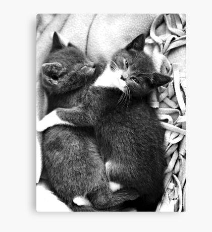 Russian Blue X Kittens Canvas Print