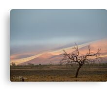 The Cold Namibian Morning Canvas Print