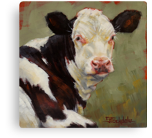 A Calf Named Ivory Canvas Print