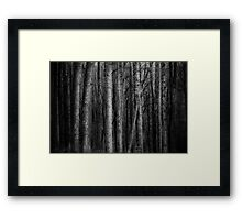 Misty Woods Framed Print