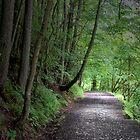 THE PATH I WALK by leonie7