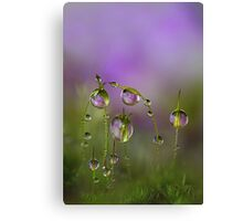 Lilac moss Canvas Print