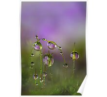 Lilac moss Poster