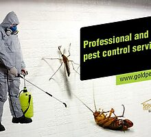 Professional and expert pest control services in Gold Coast by goldpest