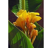 Tropic Flower Photographic Print