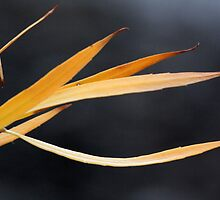 autumn abstract by Iris Mackenzie
