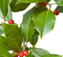 Christmas Holly Sticker