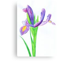 Iris in Watercolour Pencil Canvas Print