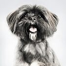 Lhasa Apso Lovers by Andrew Bret Wallis