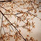 dogwood by A.R. Williams