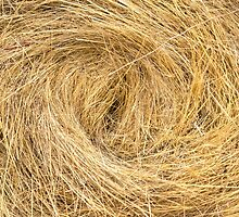 Hay bails on the field by iWorkAlone