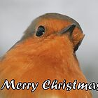 Merry Christmas - Robin by Peter Barrett