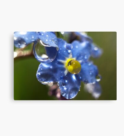 Forget Me Not? Canvas Print