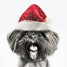 Festive Lhasa Apso by Andrew Bret Wallis