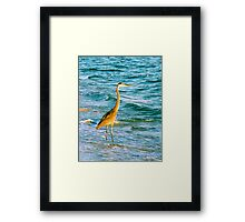Great Blue Heron with Sand Pipers Framed Print