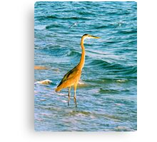 Great Blue Heron with Sand Pipers Canvas Print
