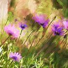 Wild flowers by zzsuzsa