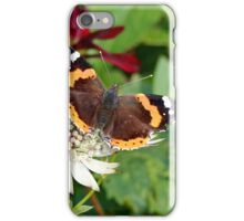 Red Admiral on White Astrantia iPhone Case/Skin