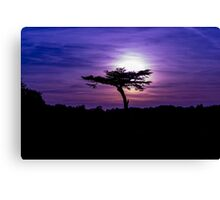 Sunset behind a tree Canvas Print