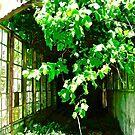 Overgrown Greenhouse, Derry, Northern Ireland by Shulie1
