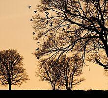 Dusk by Andrew Bret Wallis