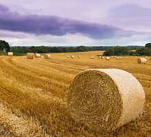 Straw bales by chris2766