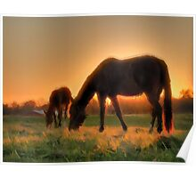 Dam and Foal - horses together in the sun. Poster