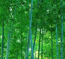 Bamboo by Viterbo