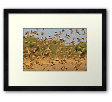 Quelea Wonder - Air Traffic Controller Nightmare Framed Print