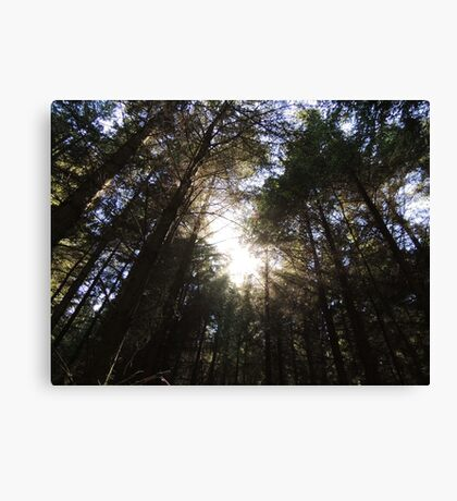 Wondrously In the Morning Canvas Print