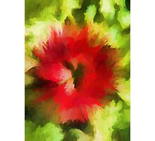 Abstract Christmas Flower Photographic Print