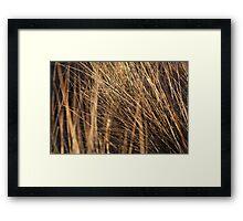 marram grass, st cyrus Framed Print