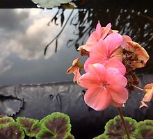 Pink flower by Tredzy