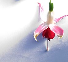 Edited flower by Tredzy