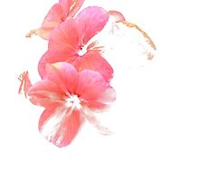 faded flower by Tredzy